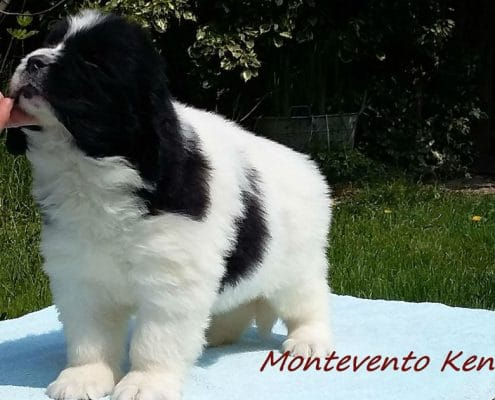 Montevento's Fortuna