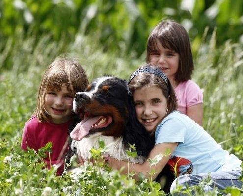 Il bovaro del Bernese e i bambini