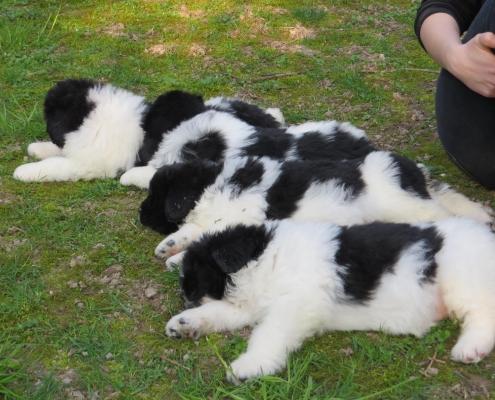 Cosa sognano i cuccioli quando dormono?