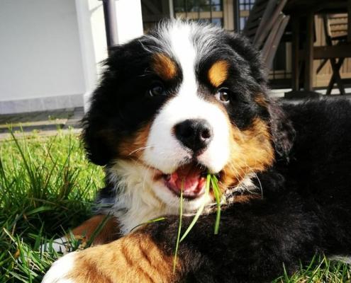 Il primo viaggio del cucciolo verso casa