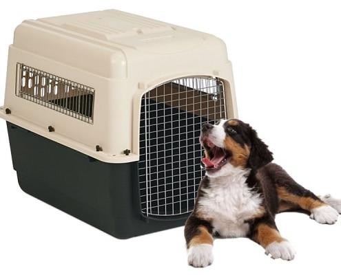 Come e quando utilizzare il kennel con il cucciolo