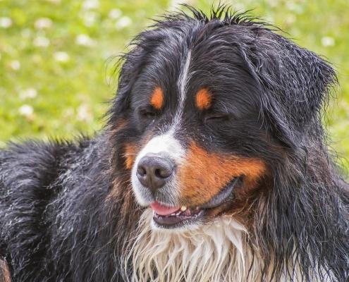 Come eliminare il cattivo odore dal tuo cane