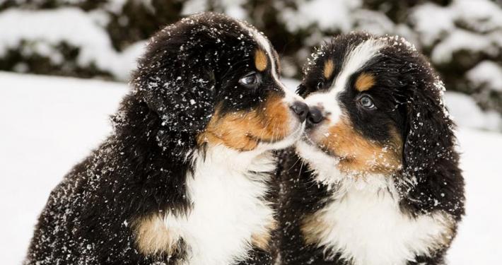 Che cos'è l'imprintng: periodi sensibili nel cucciolo