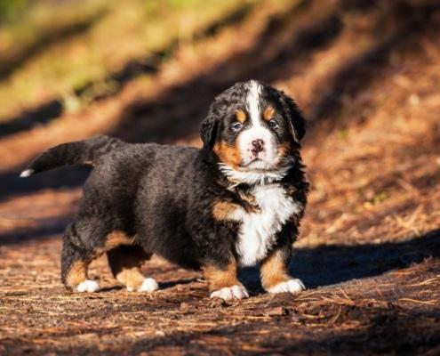 Cosa fare se il cucciolo morde e come educarlo