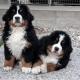 L'addestramento di un cane per la pet-therapy