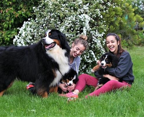 Denti del cane: crescita, cure naturali e pulizia