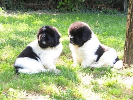 Spazzola per cani: come usarla e quale scegliere